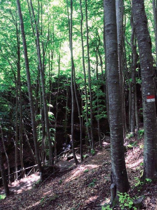 La Cascata del Doccione e il sentiero dal bosco