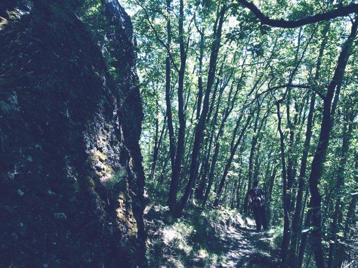 Passeggiando nel bosco del Monte Calvario
