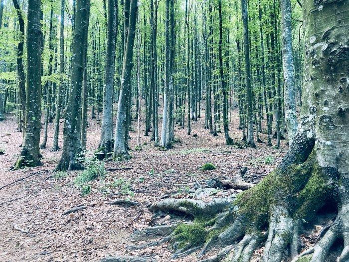 I faggi del Monte Molinatico