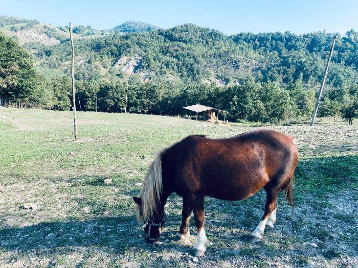 La Collina dei Cavalli a Gombio