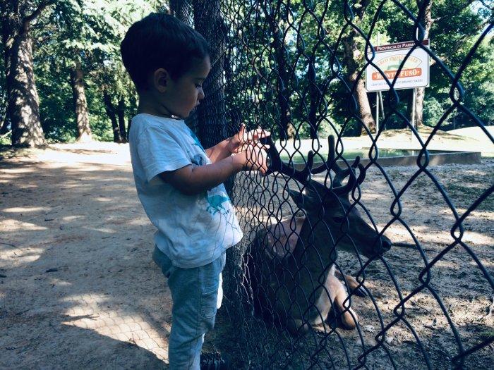 I daini del parco del Monte Fuso