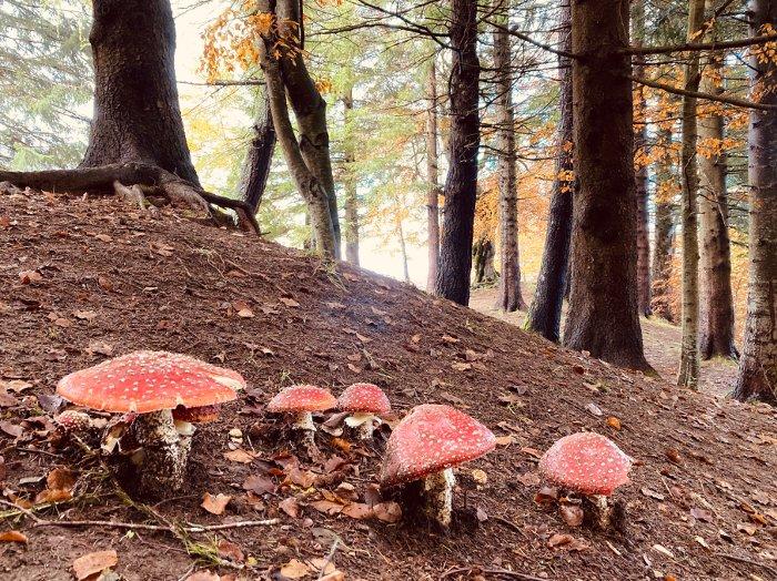I funghi nel sottobosco reggiano