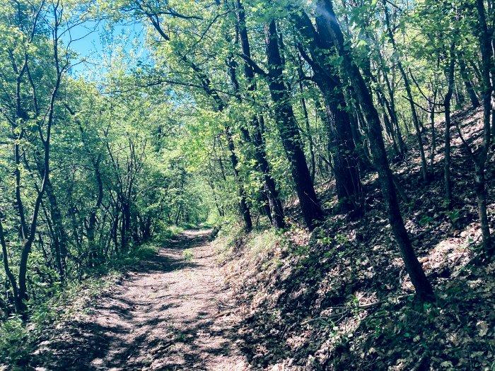 I boschi delle colline reggiane