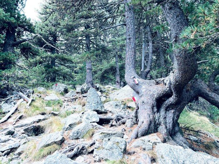 Il bosco dell'Alevé