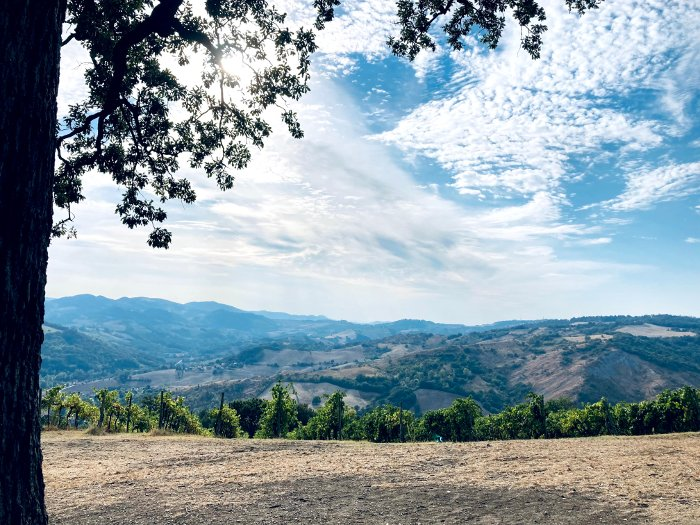 Alberi Racconta Storie: passeggiando sulle colline reggiane