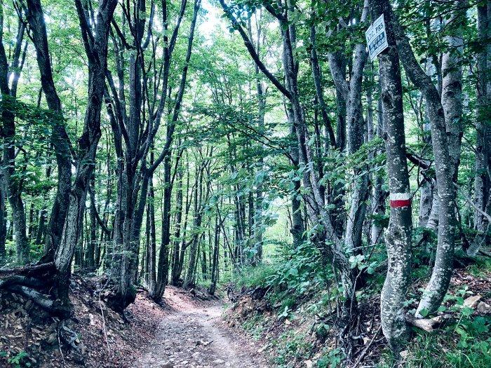 Escursione al Grande Faggio nell'Appennino Parmense