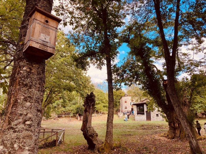 Bosco del Poranceto nell'Appennino Bolognese